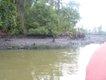 24 river polution 5.JPG