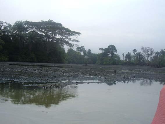 26 river polution 7.JPG