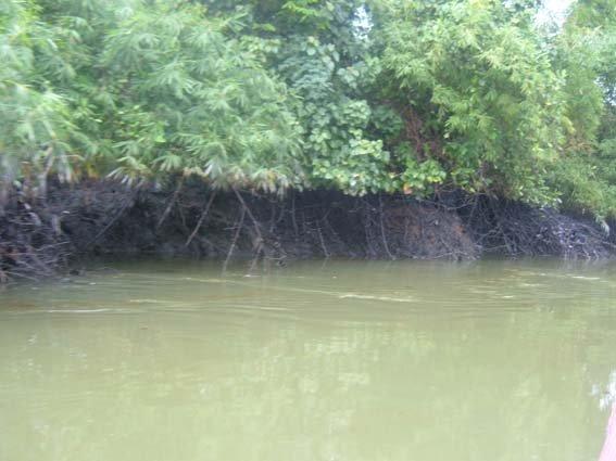 27 river polution 8.JPG