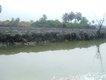 31 river polution 12.JPG