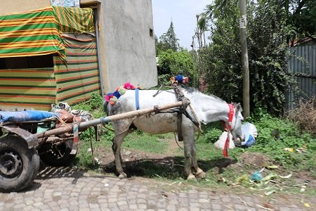 Zuriel was in a town where horse drawn carriages are still the primary means of transportation