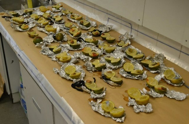 40 limes containing messages on small pieces of paper were found in a freezer